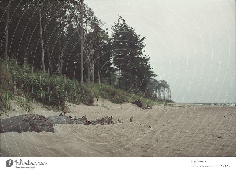 Gestrandet Natur Baum Strand Meer Wolken ruhig Einsamkeit Ferne Wald Leben Freiheit Umwelt Landschaft Sand Wege & Pfade Wind