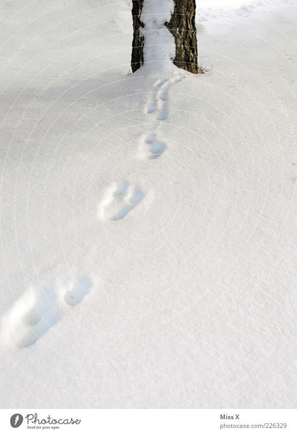 Spuren im Schnee Baum Winter kalt geheimnisvoll Baumstamm Fährte verschwunden Schneespur