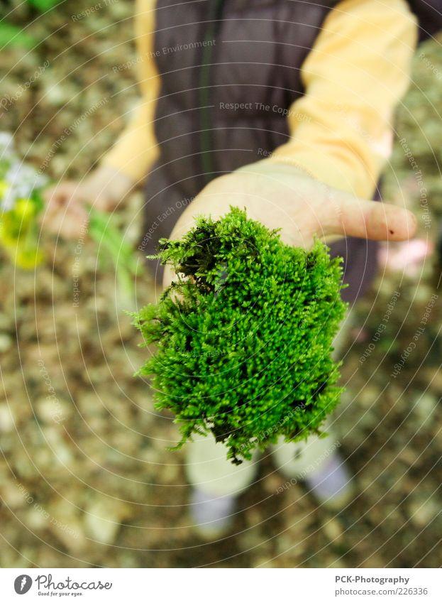 Moosgärtlein Handarbeit heimwerken Kinderspiel 1 Mensch bauen Bewegung grün Moosteppich zeigen festhalten haltend Waldboden Farbfoto Außenaufnahme Tag
