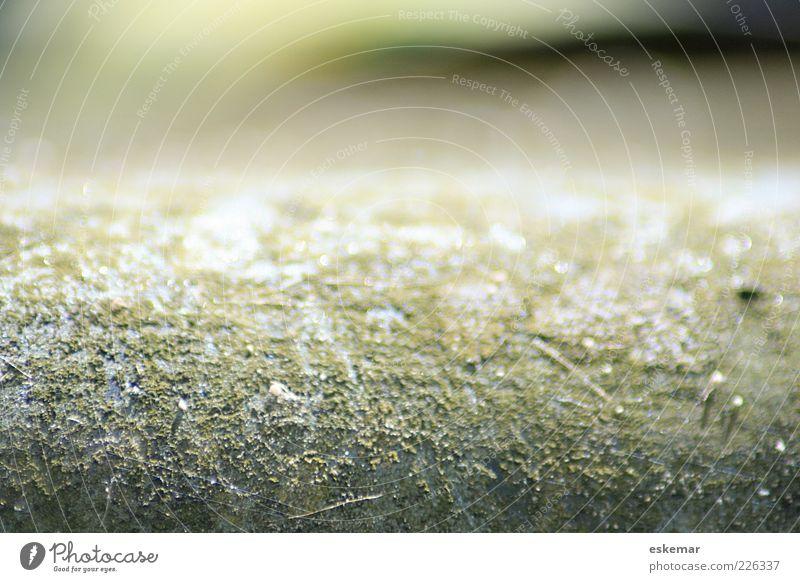 abstract Urelemente ästhetisch authentisch trocken unten grün weiß bizarr Farbe geheimnisvoll ruhig Vergänglichkeit abstrakt Strukturen & Formen Unschärfe