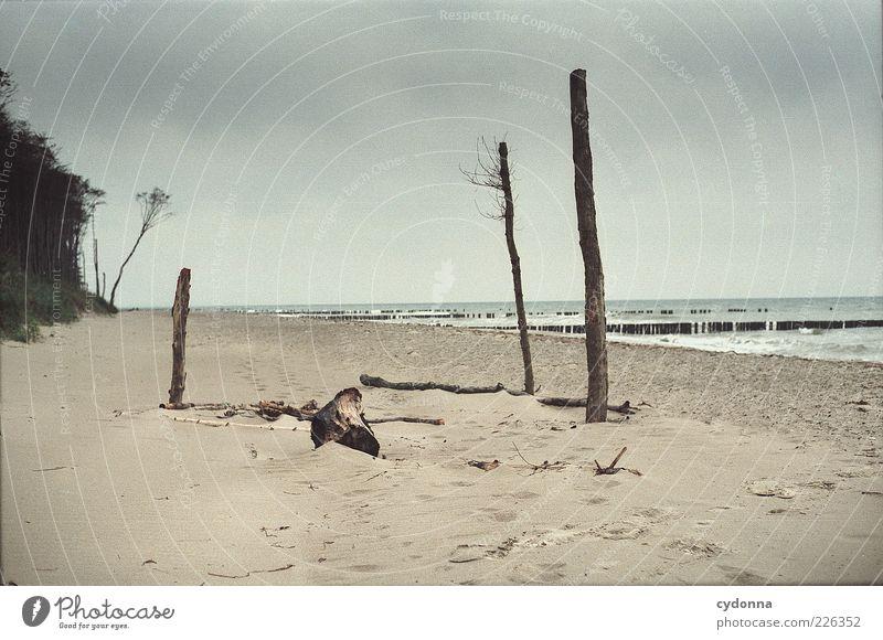 Strandskulpturen Natur Baum Ferien & Urlaub & Reisen Meer Wolken ruhig Einsamkeit Ferne Erholung Freiheit Umwelt Landschaft Wind ästhetisch einzigartig