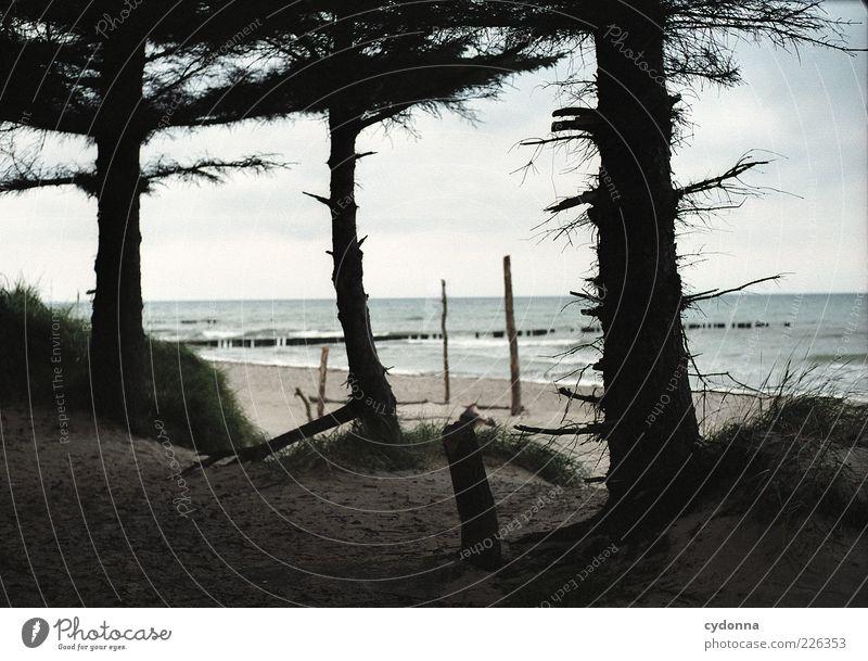 Meerblick Natur Baum Strand Ferien & Urlaub & Reisen Meer Wolken ruhig Einsamkeit Wald Erholung Umwelt Landschaft Ausflug ästhetisch einzigartig Baumstamm