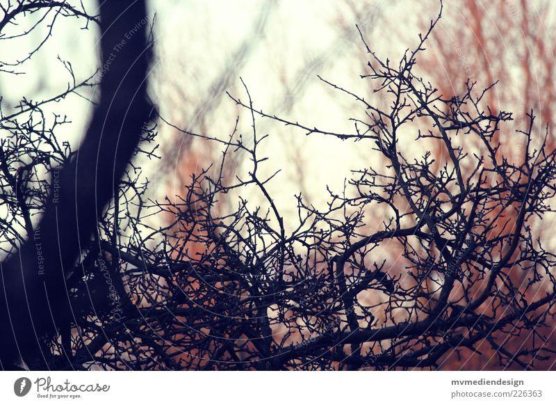 Verzweigung alt Baum natürlich Ast Abenddämmerung verzweigt