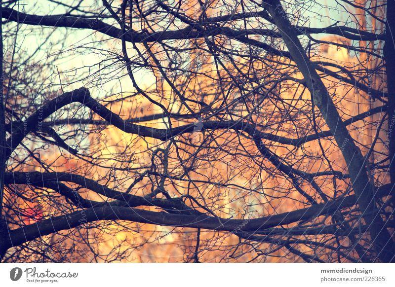 Zweigwerk Baum stark Ast Zweige u. Äste verzweigt Menschenleer Geäst Farbfoto Außenaufnahme Abend Kontrast Silhouette Unschärfe
