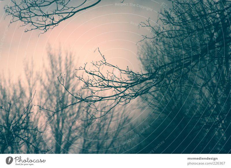 Träume Winter Baum Glaube Traurigkeit Sorge Trauer Tod Ast Zweige u. Äste Geäst Menschenleer Abenddämmerung laublos Farbfoto Außenaufnahme Dämmerung Kontrast