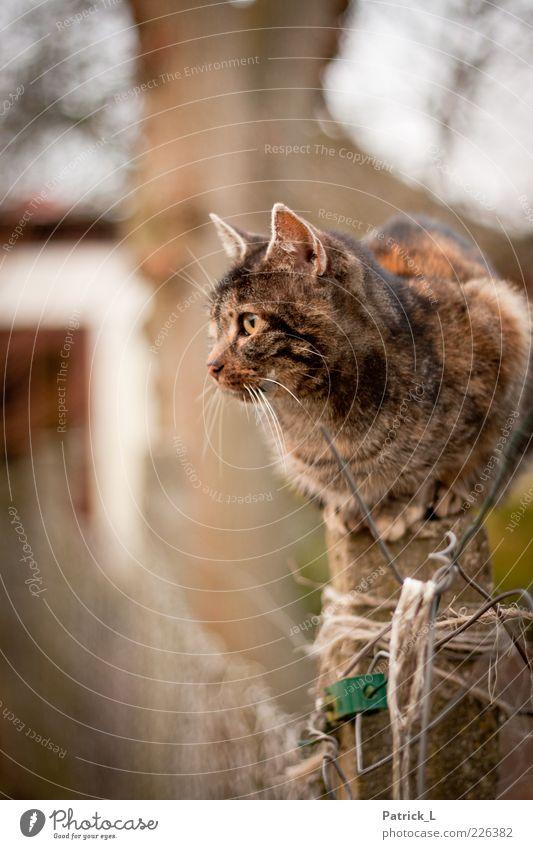 """""""Muschi"""" Katze sitzen Neugier beobachten Zaun Wachsamkeit Interesse Schüchternheit Präzision Anspannung Schnurrhaar freilebend Verschwiegenheit Zaunpfahl"""