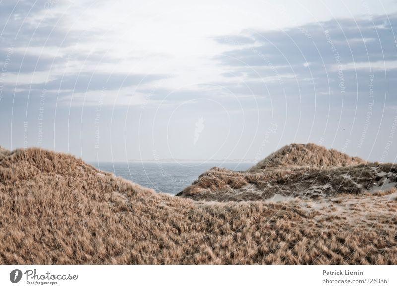 Dünenwelten Umwelt Natur Landschaft Pflanze Urelemente Luft Wasser Himmel Klima Wetter Wind Hügel Wellen Küste Nordsee kalt wild Stimmung Amrum schön Sehnsucht