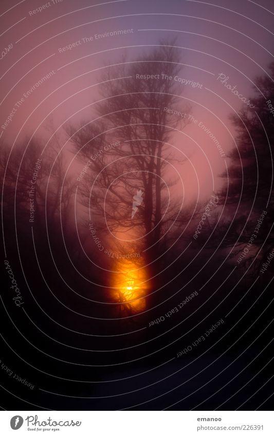 schwarzwald licht Natur Landschaft Pflanze Himmel Sonne Winter Klima Wetter Nebel Baum Wald ästhetisch nass natürlich weich gold Schauinsland Schwarzwald orange