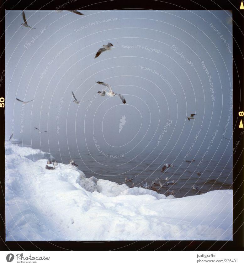 Küstennebel Umwelt Natur Landschaft Tier Wasser Winter Klima Nebel Eis Frost Schnee Strand Ostsee Meer Wildtier Vogel Möwe Tiergruppe Schwarm fliegen dunkel