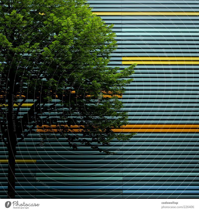 differentialgeometrie grün Baum Sommer Umwelt Gebäude Linie Fassade ästhetisch Bauwerk parallel Geometrie horizontal Richtung Laubbaum Wellblech Wellblechwand