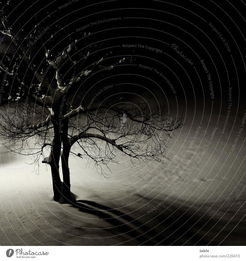 einsam wacht... Umwelt Natur Landschaft Pflanze Winter Eis Frost Schnee Baum Baumstamm Ast Zweige u. Äste frieren stehen dunkel kalt schwarz weiß Gefühle
