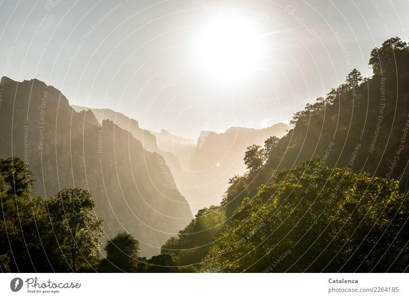 Sonnige Bergwelt grün Landschaft Sonne Baum Erholung Einsamkeit Wald Berge u. Gebirge Umwelt braun Stimmung Felsen wandern glänzend gold ästhetisch