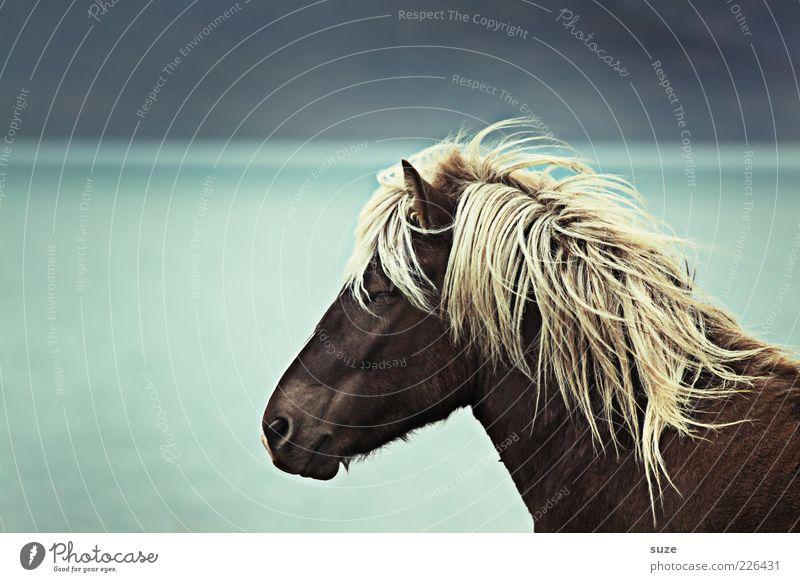 Träumer Umwelt Natur Tier Horizont Wind Küste Meer Nutztier Wildtier Pferd Tiergesicht 1 stehen träumen warten ästhetisch Freundlichkeit natürlich wild Stimmung