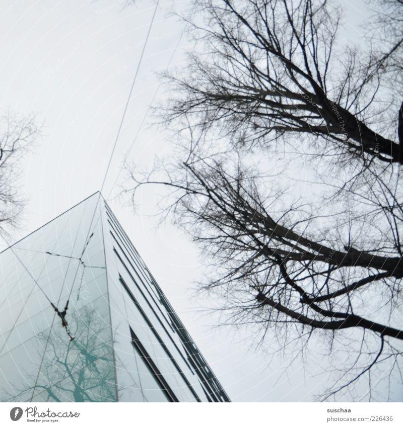 spitz! Himmel Baum Winter Haus dunkel kalt Fenster grau Architektur Gebäude Ecke Spitze Ast Draht Symmetrie laublos