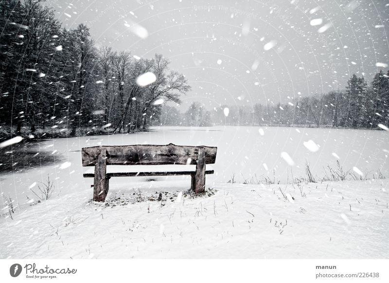 Schneetreiben Natur Winter schlechtes Wetter Unwetter Wind Sturm Eis Frost Schneefall Baum Wald Seeufer Holz authentisch frisch kalt chaotisch Endzeitstimmung
