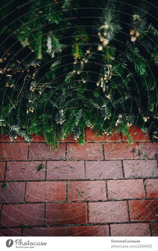 Fir branches and pavement Natur Weihnachten & Advent grün Winter Dekoration & Verzierung Bürgersteig Backstein Tanne Tannennadel Tannenzweig