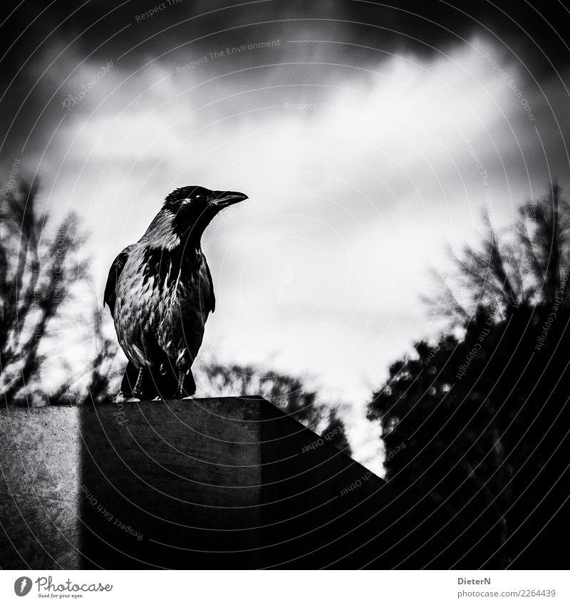 Übersicht Himmel Wolken Tier Vogel 1 grau schwarz weiß Berlin Beton Krähe Sträucher Schwarzweißfoto Außenaufnahme Menschenleer Textfreiraum oben