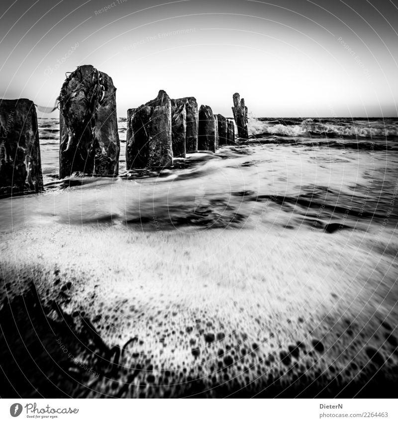 Umspült Strand Meer Landschaft Wasser Horizont Herbst Ostsee grau schwarz weiß Kühlungsborn Mecklenburg-Vorpommern Buhne Wellen Schaum Schwarzweißfoto