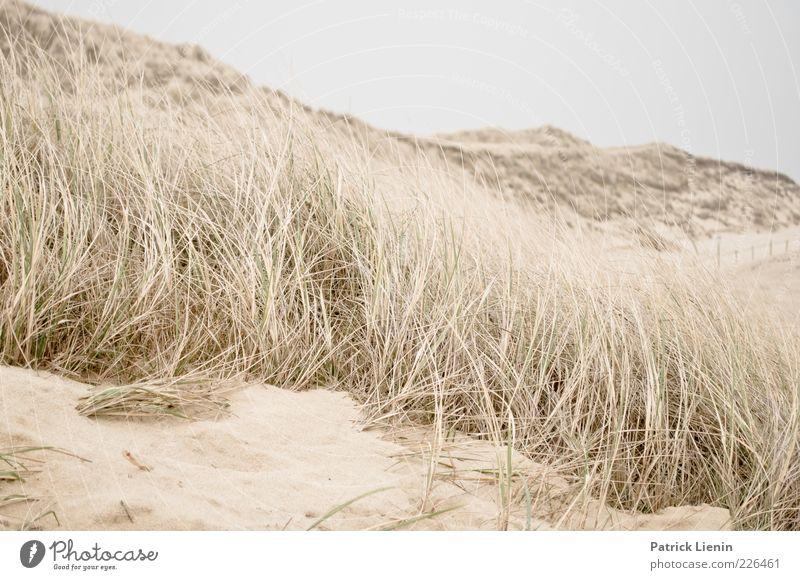 Time for yourself Umwelt Natur Landschaft Pflanze Erde Sand Luft Wetter Wind Küste Strand Meer weich Stimmung Amrum strandhafer Düne Stranddüne Hügel sanft