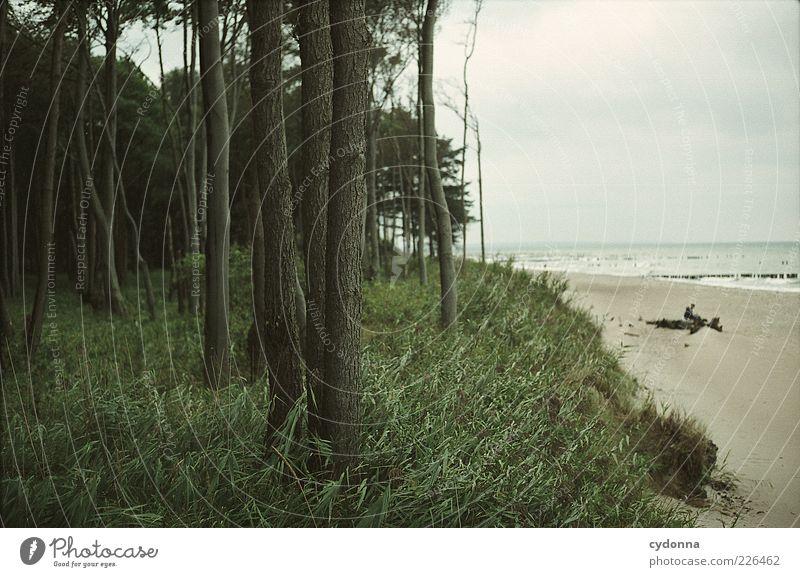 Einfach da sitzen und aufs Meer schauen Natur Baum Strand Ferien & Urlaub & Reisen Wolken ruhig Einsamkeit Ferne Wald Erholung Leben Freiheit Umwelt Landschaft