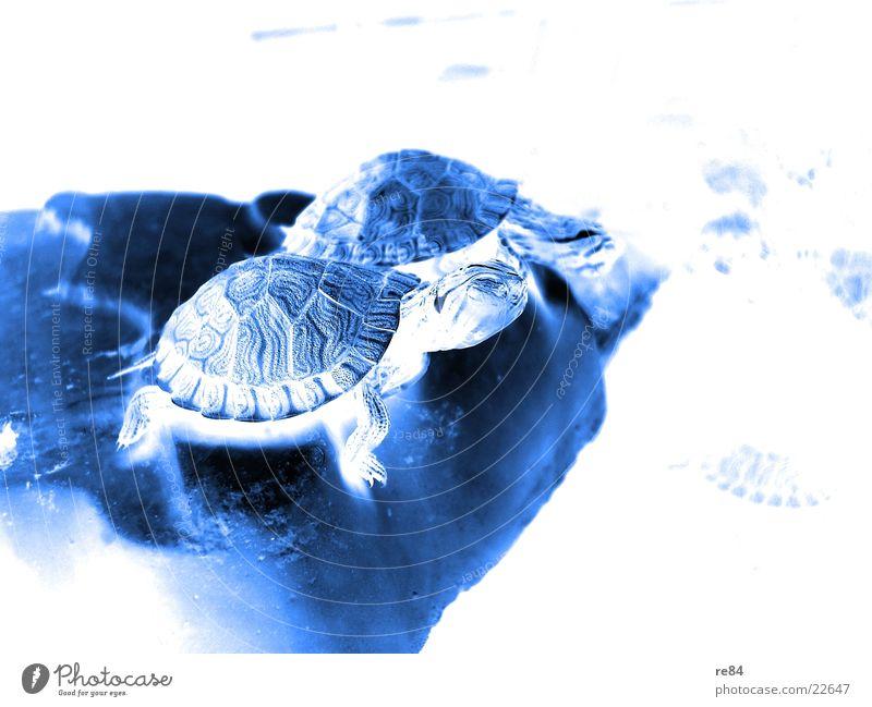 back to the roots - turtle 2 Wasser alt Tier Leben klein Schilder & Markierungen Schwimmen & Baden Wildtier Amerika Aquarium krabbeln füttern Schildkröte
