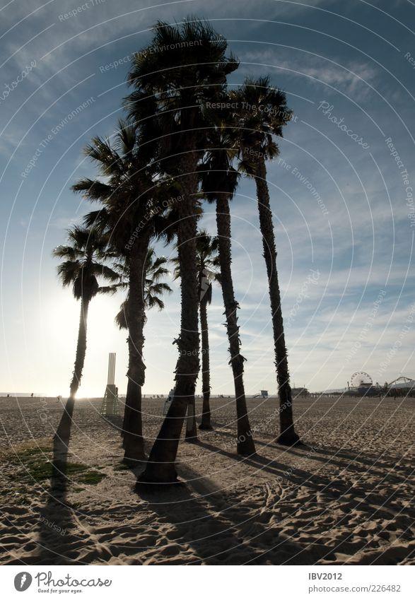 Hoch hinaus Natur Sand Himmel Wolken Sonne Strand Meer Erholung Santa Monica Los Angeles Vergnügungspark Palme Fußspur USA Kalifornien Küste Amerika Farbfoto