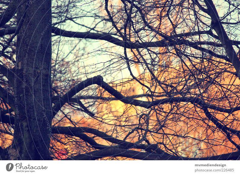 Baum Natur Urelemente Schönes Wetter schön stark Zweige u. Äste verzweigt Retro-Farben traumhaft Detailaufnahme Baumstamm dick Schwache Tiefenschärfe Farbfoto