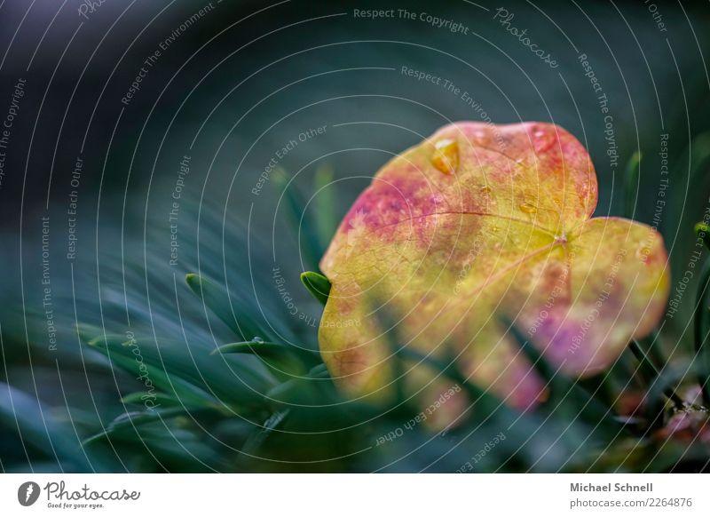 herbstbunt Umwelt Natur Pflanze Herbst Baum Blatt Wald schön natürlich gelb grün rot Sympathie Zusammensein Gegenteil Farbfoto Außenaufnahme Nahaufnahme