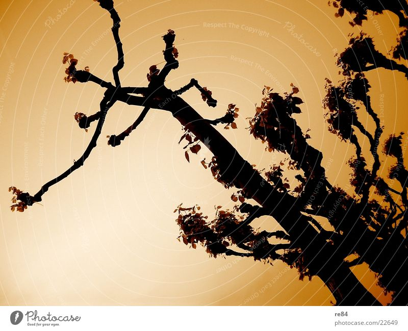 Treestreet orange Natur Wasser Himmel Baum blau Straße Wald dunkel Wiese Wege & Pfade hell orange frisch Köln Allee Fußgänger