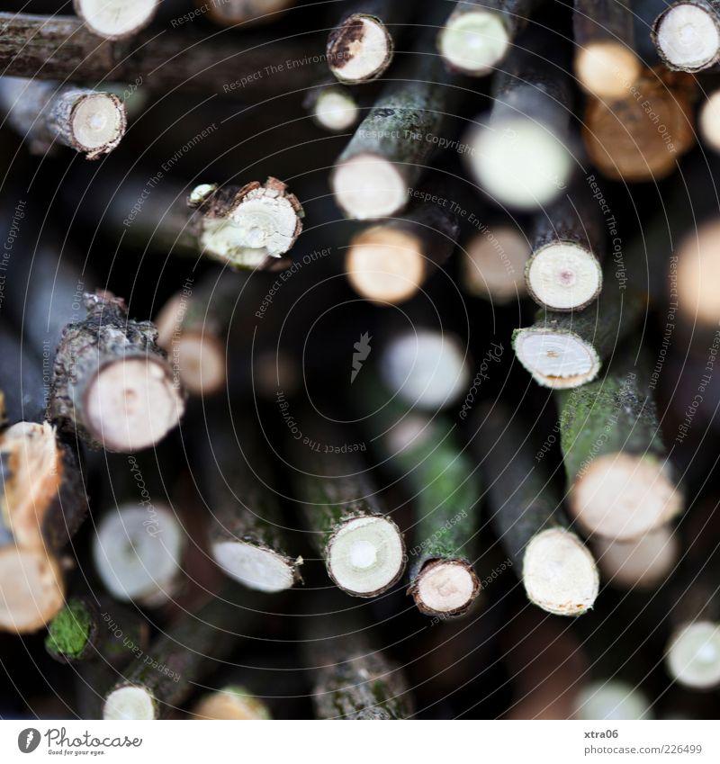 hölzern schwarz Holz Ast viele Verschiedenheit Zweig Baumrinde
