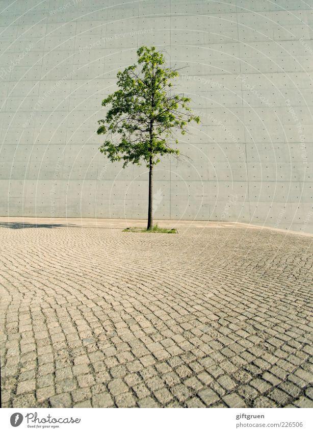 """""""...und bin so klug als wie zuvor"""" Sommer Pflanze Baum Platz Bauwerk Gebäude Architektur Mauer Wand Wachstum einfach Ordnungsliebe einzigartig einzeln Unikat"""