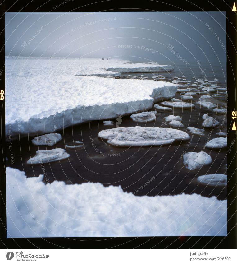 Küstennebel Umwelt Natur Landschaft Wasser Winter Klima Nebel Schnee Ostsee Meer Prerow Darß dunkel kalt natürlich wild Stimmung Eisscholle Farbfoto