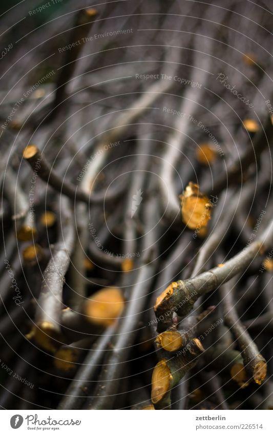 Apfelbaum ausästen Natur Baum Pflanze Umwelt viele Ast Zweig Anhäufung Gartenarbeit geschnitten Baumrinde Menschenleer Nutzpflanze