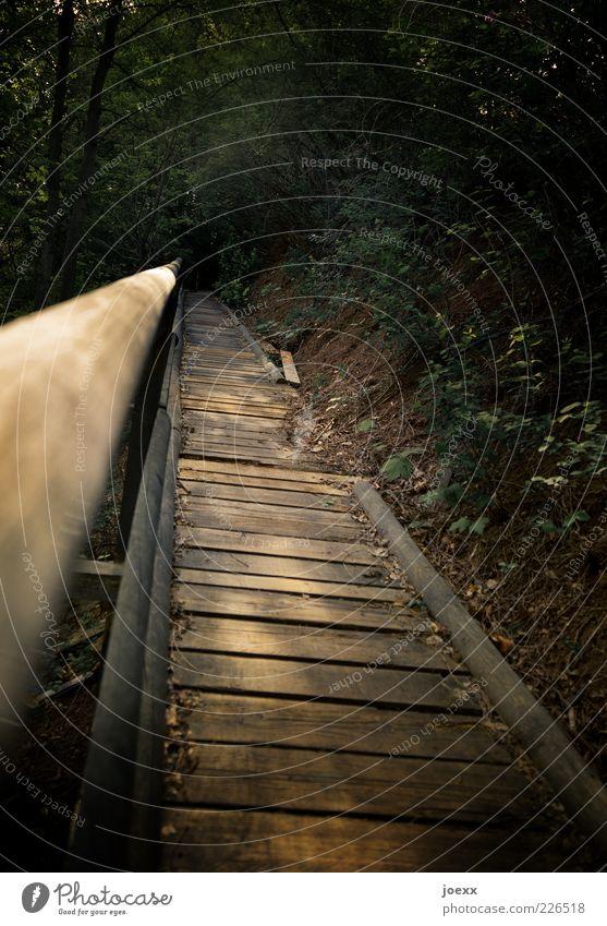 Weg und Ziel Natur alt Baum Wald oben grau Wege & Pfade braun Angst Sträucher Hoffnung Hügel Verfall Treppengeländer Zukunftsangst Verzweiflung