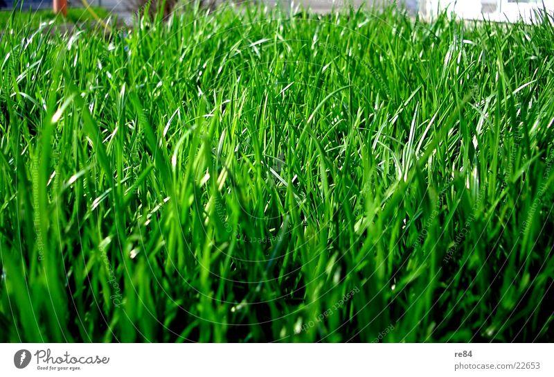 green side of life Gras grün Sauerstoff Photosynthese Ameise Insekt nah Zoomeffekt Sommer Frühling Wohnung schön Reifezeit Wachstum feucht trocken Natur Pflanze