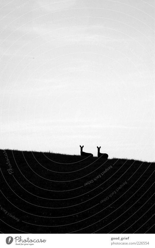 zu zweit ist alles schöner. Himmel Natur Wolken Tier Wiese Umwelt Kopf Tierjunges Wildtier stehen Hügel Schönes Wetter Reh freilebend freilaufend Rehkitz