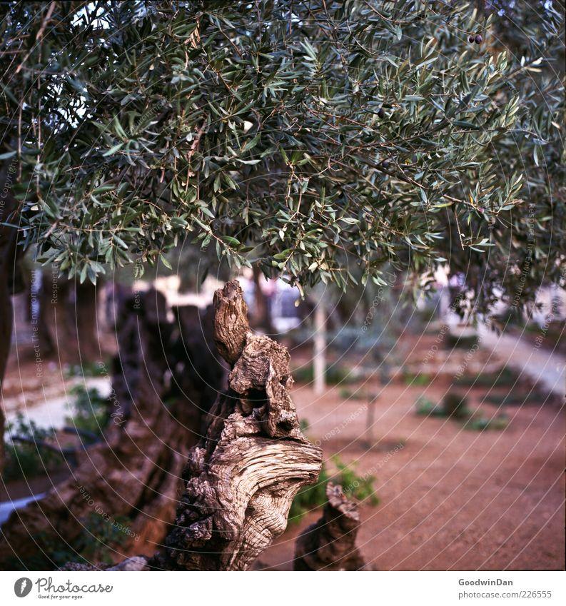 oh, hab gestern vergessen zu gießen... Natur alt schön Baum Pflanze Blatt Herbst Umwelt Holz Stimmung natürlich trist authentisch außergewöhnlich viele trocken