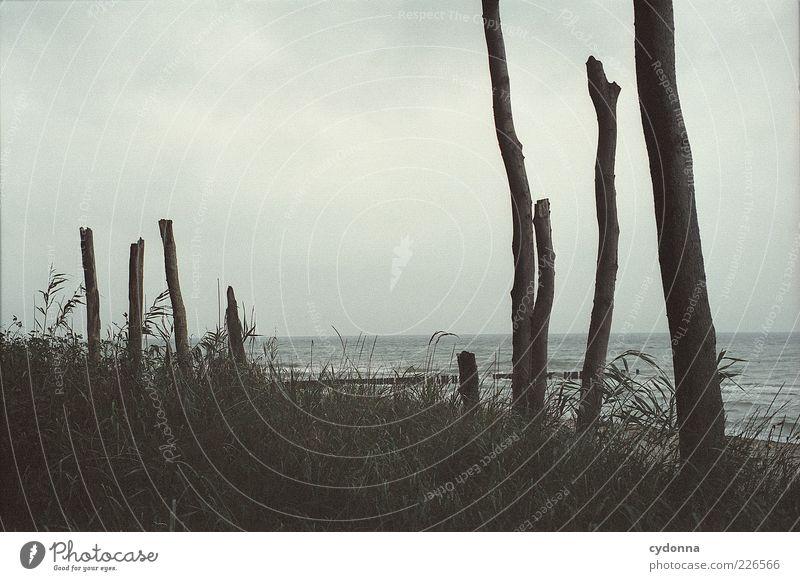 Ruhe Natur Baum Strand Meer Wolken ruhig Einsamkeit Erholung Freiheit Umwelt Landschaft Gras ästhetisch einzigartig Stranddüne Ostsee
