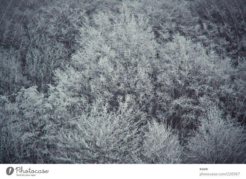 Finsterwalde Umwelt Natur Landschaft Winter Baum Wald dunkel kalt grau Einsamkeit Trauer Ast Baumkrone buschig Vogelperspektive Laubwald Farbfoto