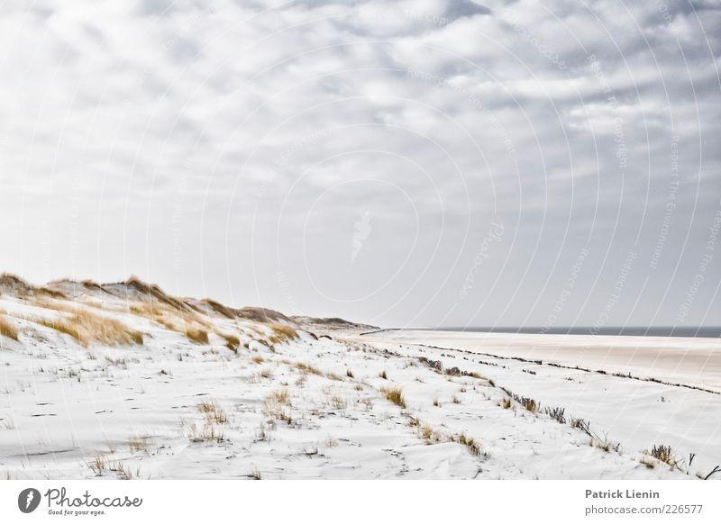 Peace & Quiet Umwelt Natur Landschaft Urelemente Sand Luft Wasser Himmel Wolken Horizont Sonnenlicht Klima Wetter Schönes Wetter Wind Pflanze Sträucher Küste