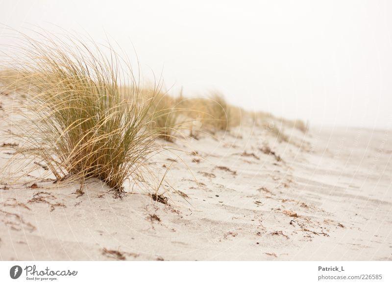 Urlaub Natur Pflanze Ferien & Urlaub & Reisen Strand Erholung Freiheit Gras Sand Küste hell Wind Sträucher Frieden Stranddüne Düne Wildpflanze