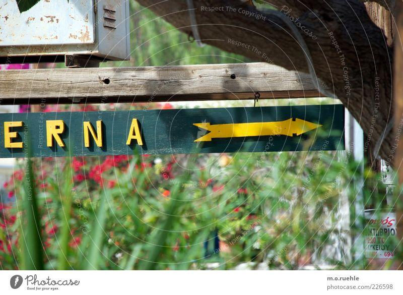 und Gabi Schilder & Markierungen richtungweisend Richtung Freundlichkeit Fröhlichkeit lustig trashig grün gelb Pfeil Buchstaben Farbfoto mehrfarbig