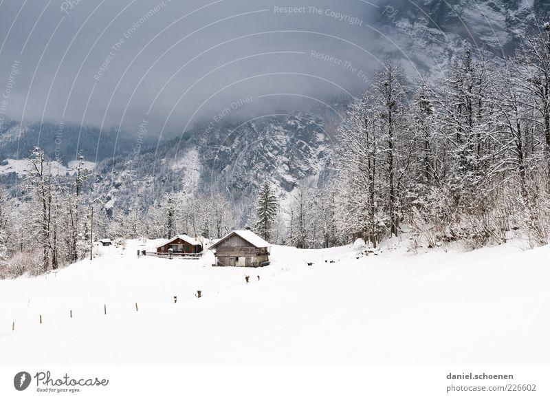 endlich wieder Schnee !! Natur Baum ruhig Winter Haus Schnee Berge u. Gebirge Umwelt Eis Klima Frost Alpen Hütte schlechtes Wetter Nebelbank laublos