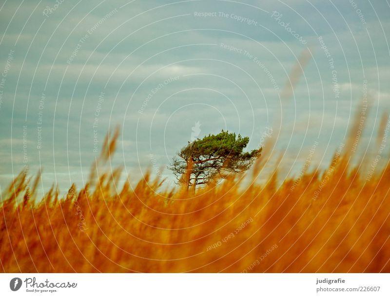 Weststrand Umwelt Natur Landschaft Pflanze Himmel Wolken Klima Wind Baum Gras Küste Ostsee Darß natürlich Wärme wild Stimmung Idylle Farbfoto Außenaufnahme