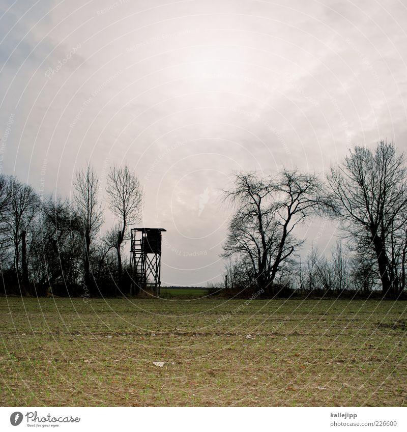 neukunden akquise Himmel Natur Baum Pflanze Umwelt Landschaft Arbeit & Erwerbstätigkeit Feld Klima Sträucher trist Turm beobachten Beruf Landwirtschaft