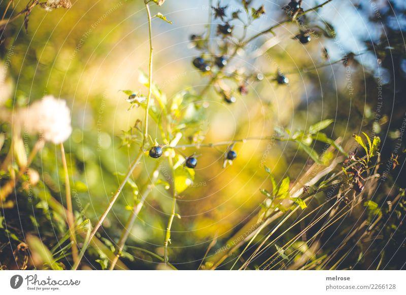 Perlen aber nicht aufgefädelt Himmel Natur Pflanze blau Farbe grün Erholung Blatt Wald Wärme Herbst Blüte Gras Frucht leuchten glänzend