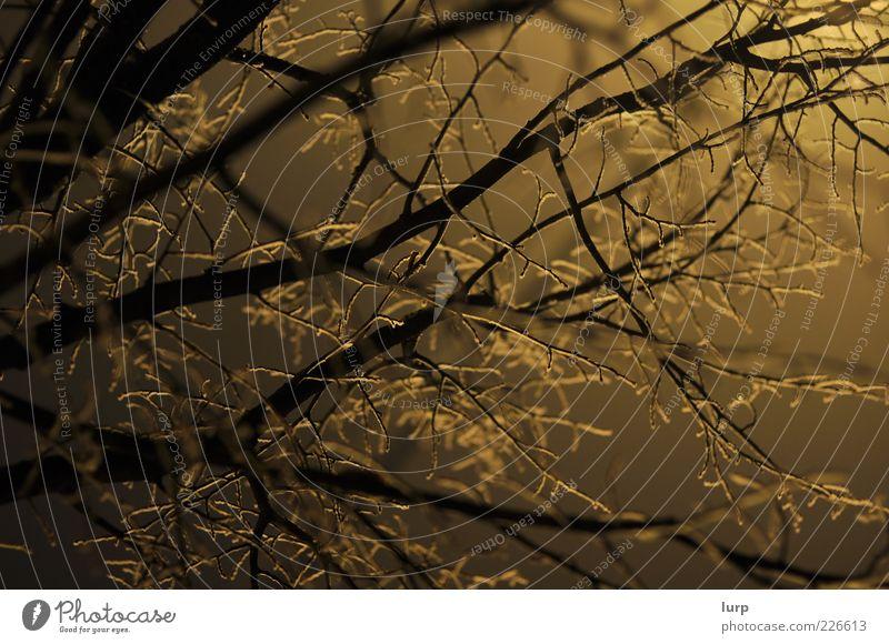 Frostbaum Natur Baum Pflanze Winter gelb kalt Umwelt Holz Eis Nebel Baumkrone Textfreiraum Geäst Zweige u. Äste verzweigt Nacht