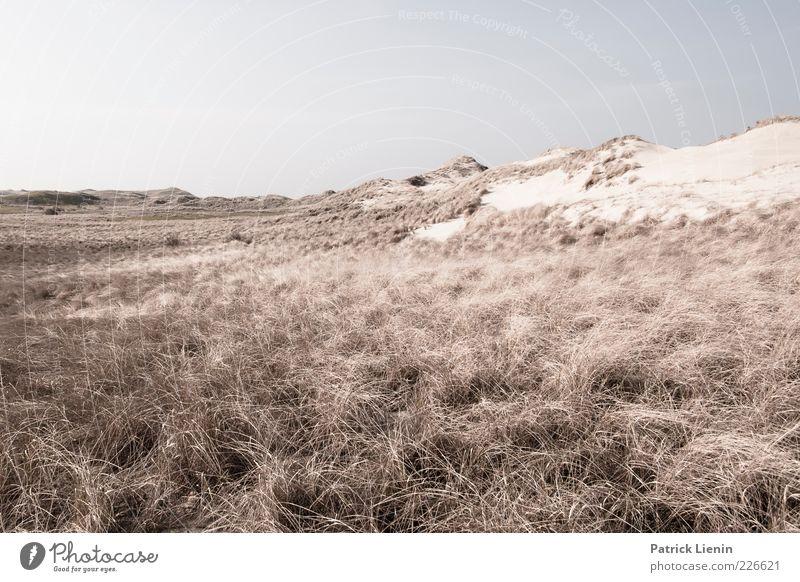 Dünenwelten (II) Natur Pflanze Ferne Umwelt Landschaft kalt Gras Sand Küste Luft Stimmung Erde Wetter Wind Klima Insel