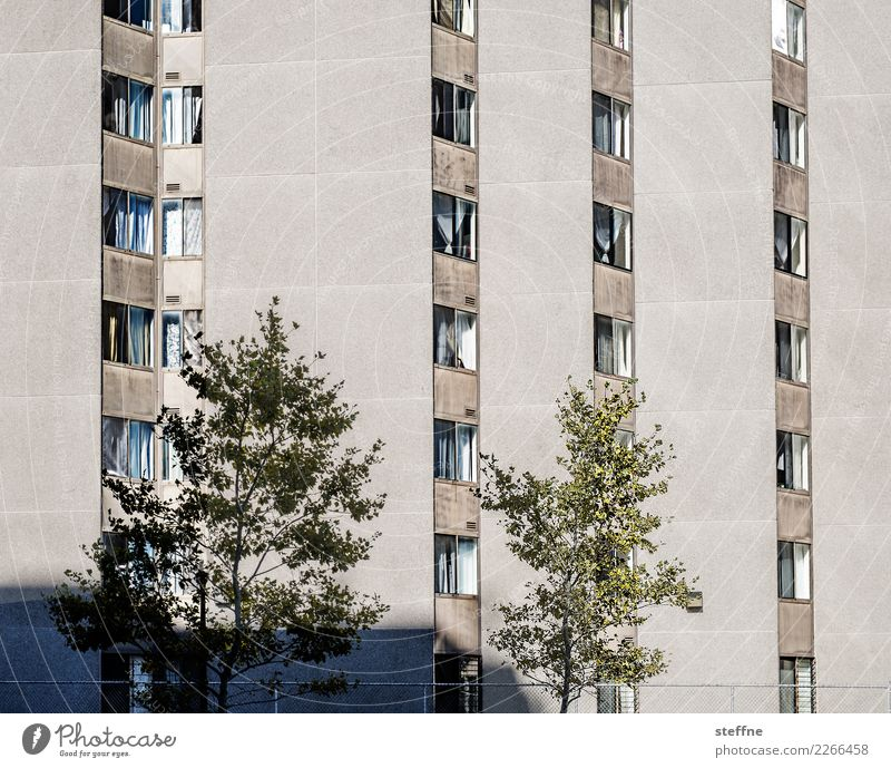 Mein Block III Baum Stadt Haus Häusliches Leben Washington Washington DC Fassade Hochhaus Farbfoto Außenaufnahme Menschenleer