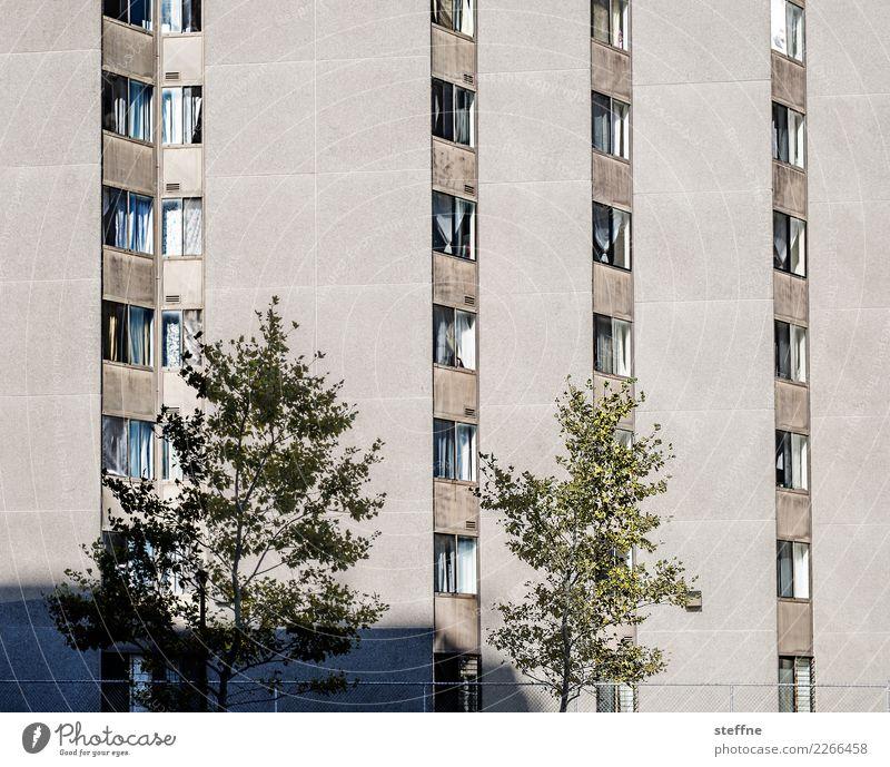 Mein Block III Stadt Baum Haus Fassade Häusliches Leben Hochhaus Washington Washington DC